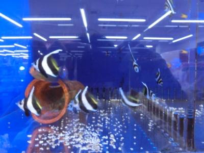 海水魚 355