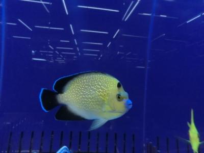海水魚 365