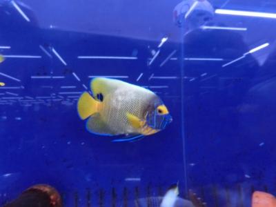 海水魚 362