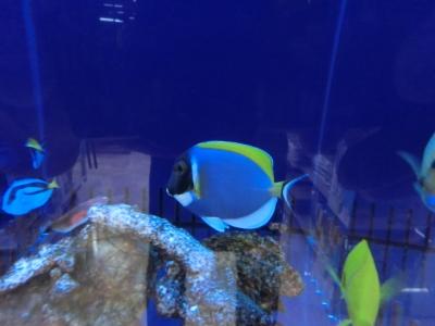 海水魚 363
