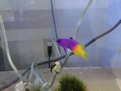 海水魚 364