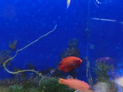 海水魚 366