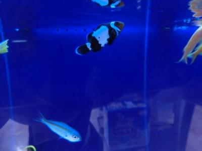 海水魚 371
