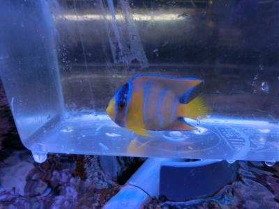 海水魚 367