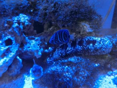 海水魚 369