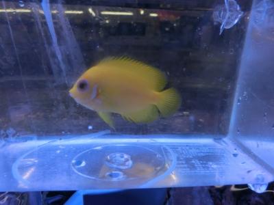 海水魚 383