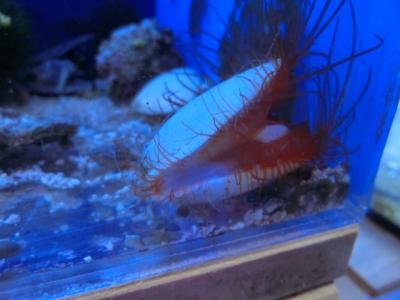 海水魚 388