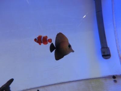海水魚 394