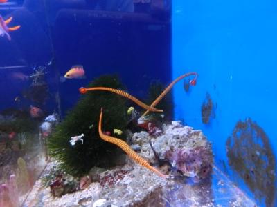 海水魚 396