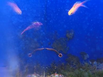 海水魚 397