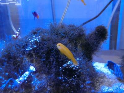 海水魚 399