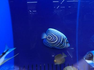 海水魚 405