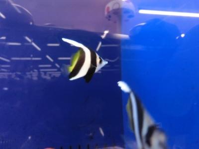 海水魚 404