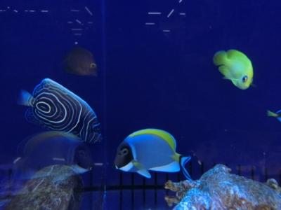 海水魚 406