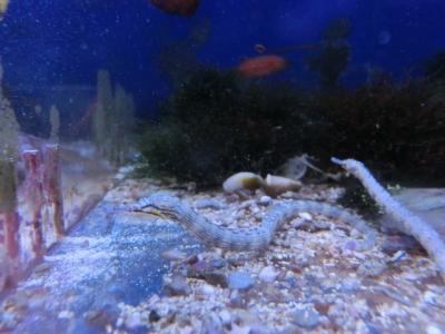 海水魚 412