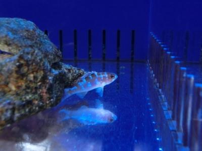海水魚 408