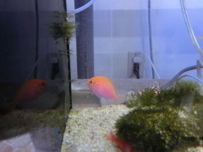 海水魚 409