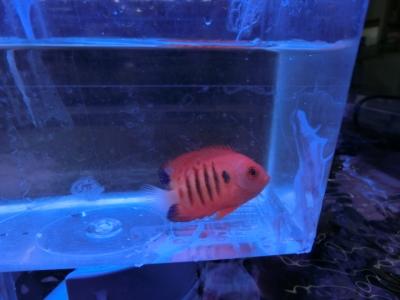 海水魚 411