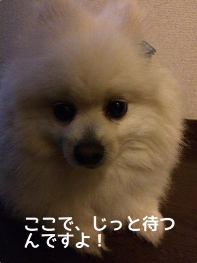 fc2blog_20140609195045dcc.jpg