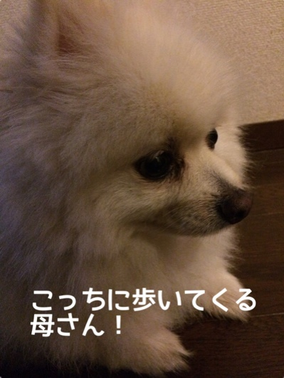 fc2blog_201406091951266b5.jpg