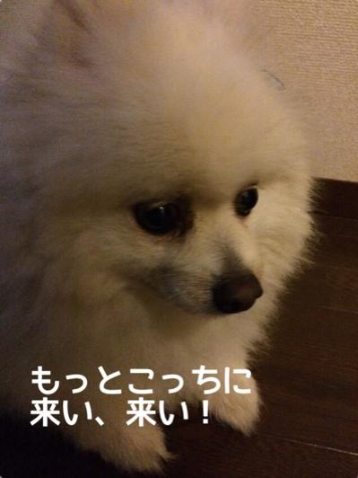 fc2blog_201406091952578c2.jpg