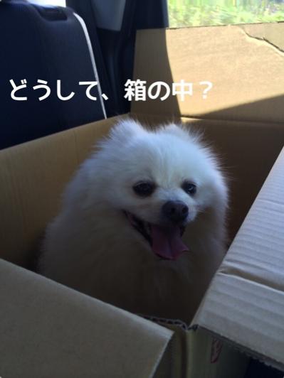 fc2blog_2014062419484874e.jpg