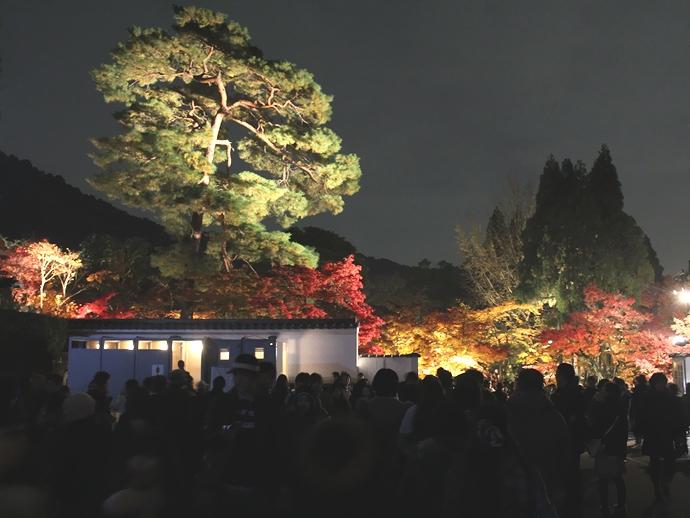 永観堂ライトアップ 開場前の大混雑