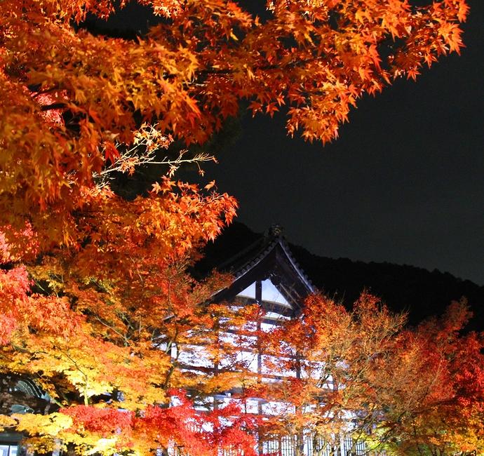 永観堂ライトアップ 寺務所と紅葉
