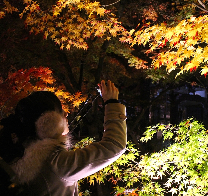 永観堂の紅葉ライトアップ モミジを撮る女性
