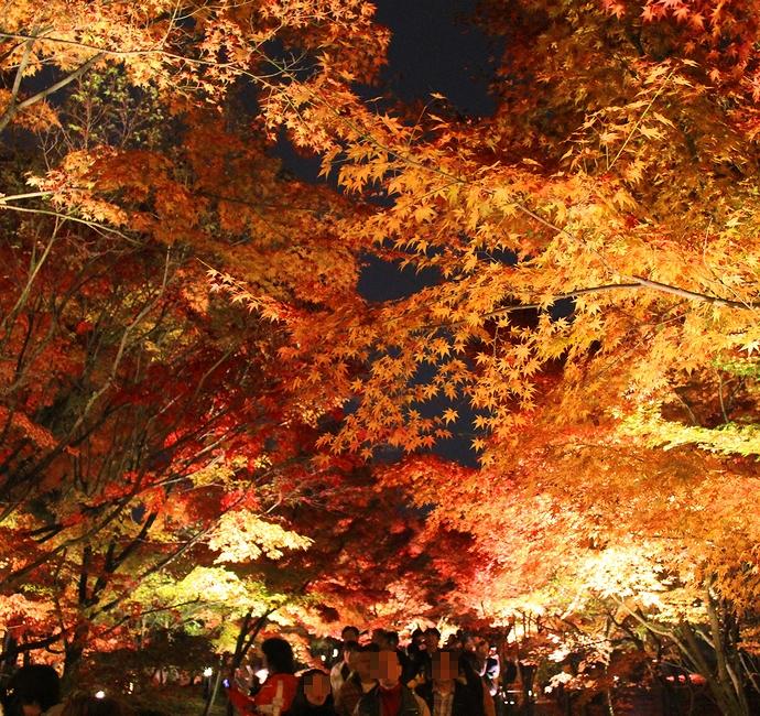 もみじのトンネルを歩く 京都・永観堂の紅葉ライトアップ