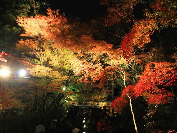 永観堂紅葉ライトアップ モミジのトンネル