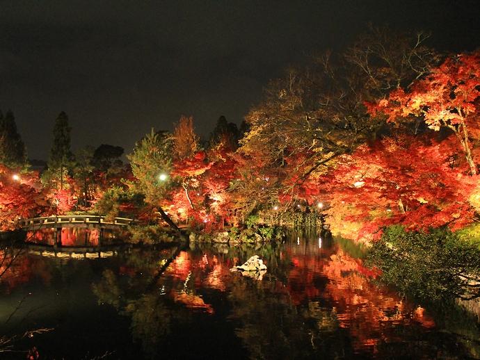 京都・永観堂の紅葉ライトアップ 放生池の様子