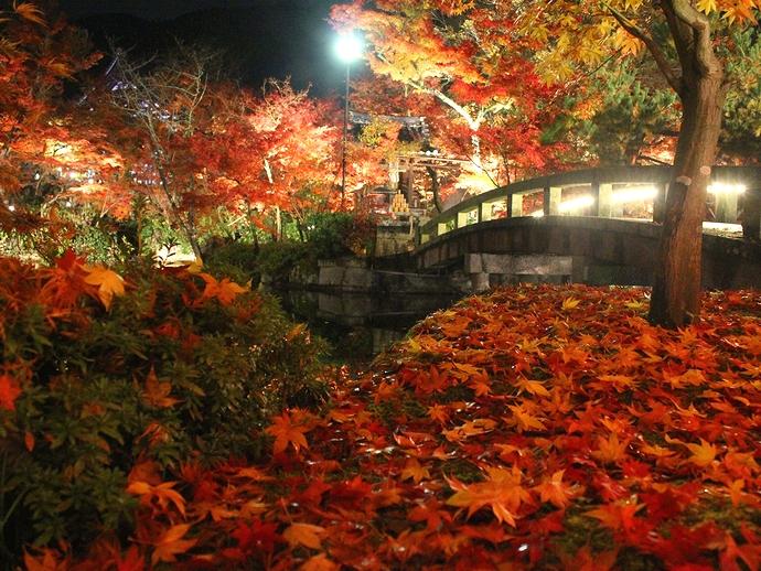 永観堂ライトアップ 足元を彩る散り紅葉