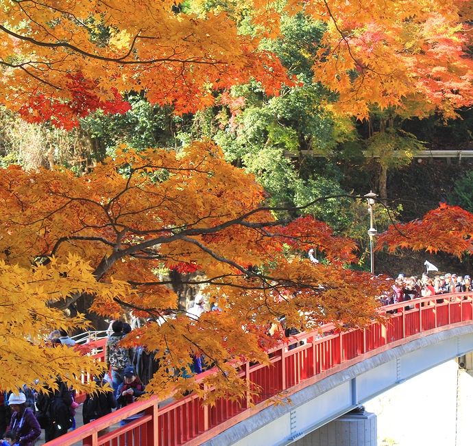 香嵐渓の紅葉 待月橋とともに