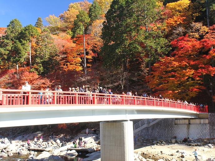 香嵐渓の紅葉 鮮やかに染まる山と大混雑の待月橋