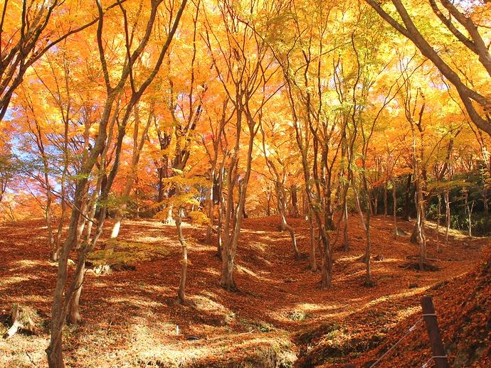 香嵐渓のもみじの森を歩いて