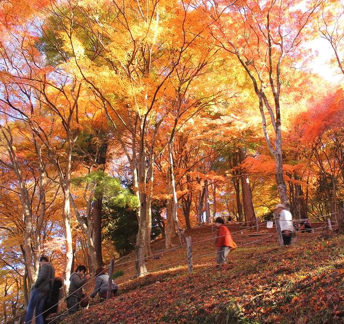 香嵐渓の紅葉 染まる川沿いの森