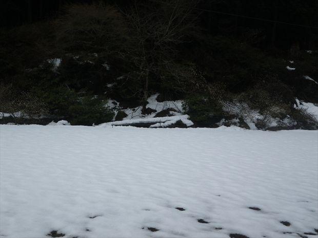 田んぼは一面の雪
