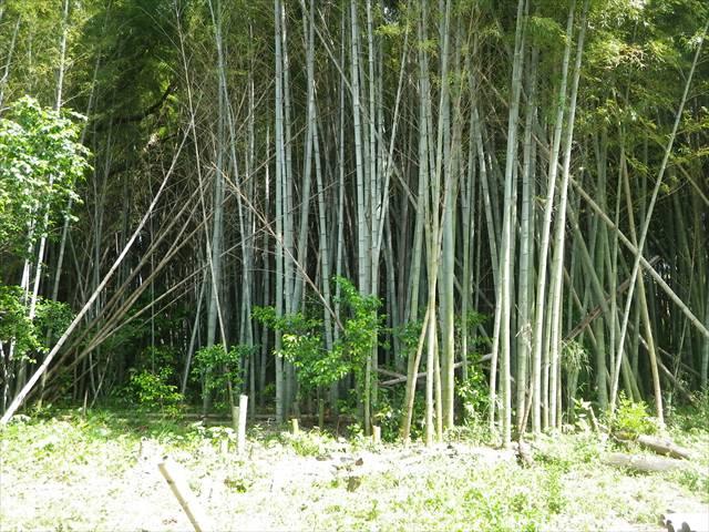 後は竹を切りまくるだけ。。。