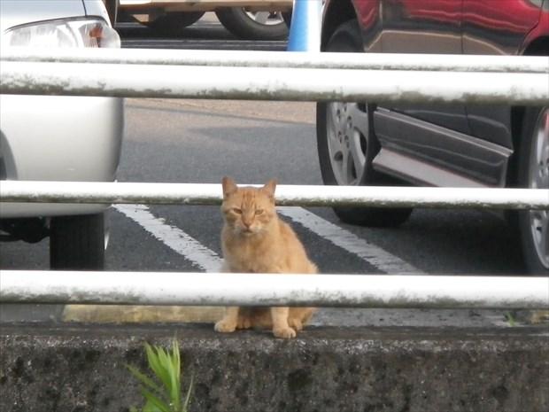 この辺りのボス猫