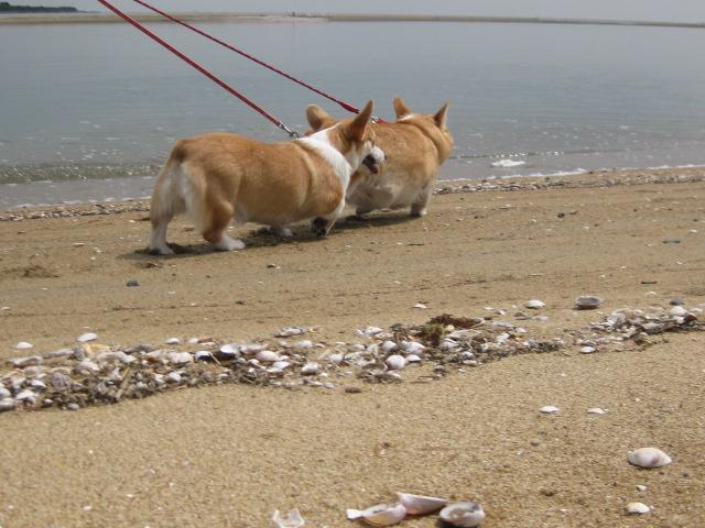 浜辺の散歩