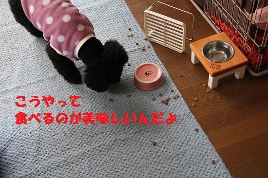IMG_04832.jpg