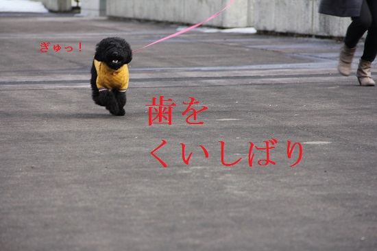 IMG_04962.jpg