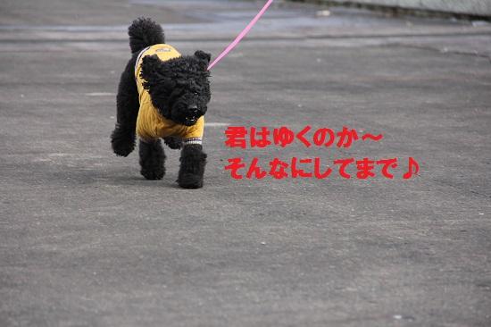 IMG_04972.jpg