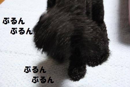 IMG_25932.jpg