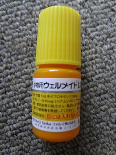 DSC06530.jpg