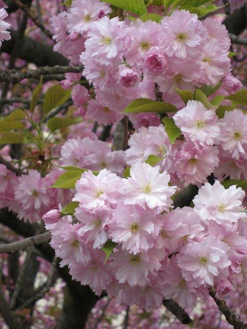 2014年3月29日 シャトレ~サンミッシェル 041