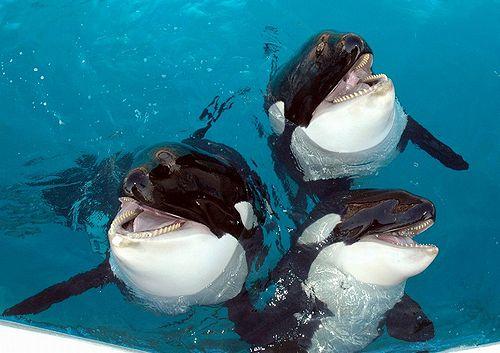 orca_12.jpg