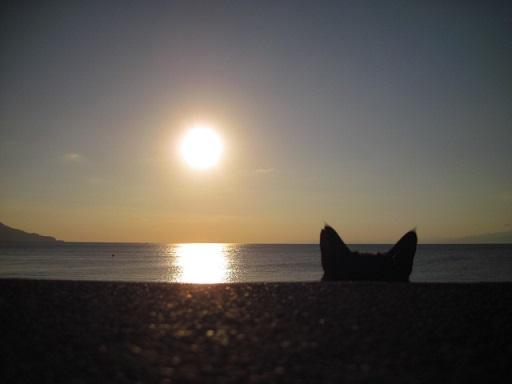 夕陽とねこ
