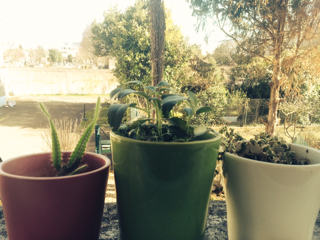 plante 2mars 14